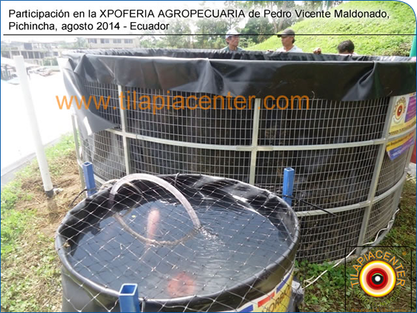 Cursos y talleres de cultivo de tilapia en estanques for Estanque geomembrana