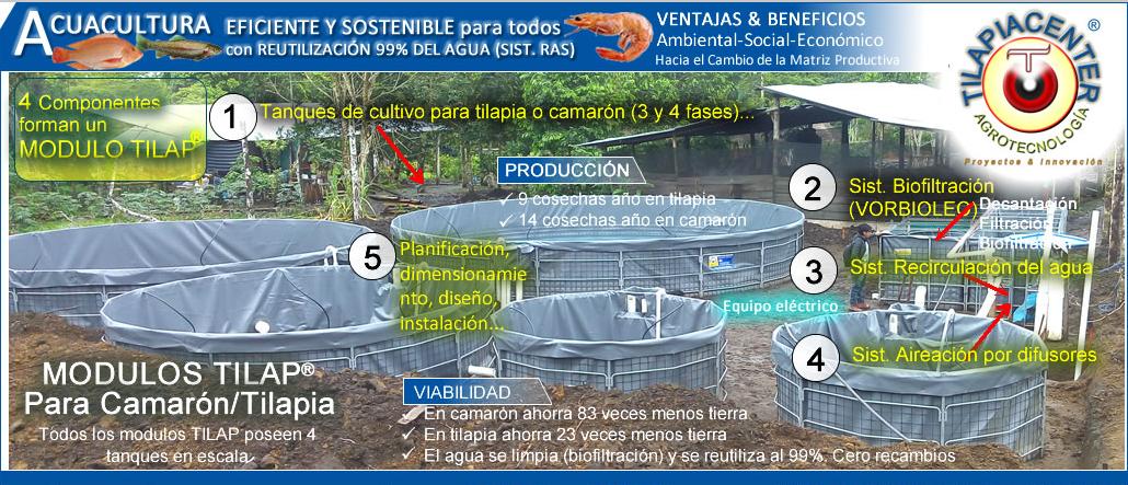 Tilapiacenter negocio cultivo y cria en estanques tilapia for Tanques para cria de tilapia