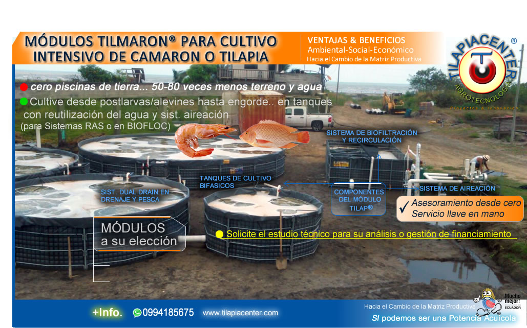Tilapiacenter estanques y piscinas para cultivo de for Proyecto de tilapia en estanques