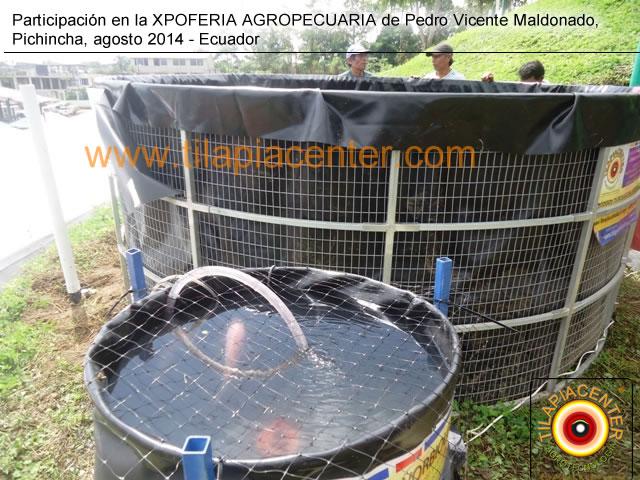 Participaci n de tilapiacenter en expoferia pvm 2014 for Estanques de geomembrana para tilapia