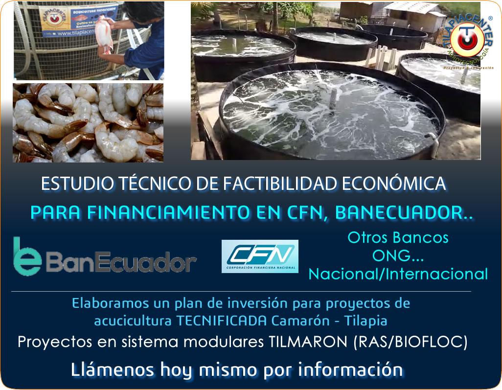 Plan de negocios y estudio económico para camarón y tilapia