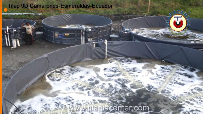 Tanques en geomembrana para camaron instalados en Esmeraldas. Sistemas RAS
