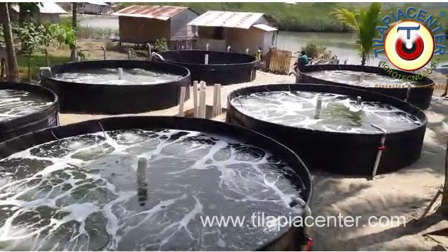 Cultivo camaron tanques geomembrana Portete Esmeraldas