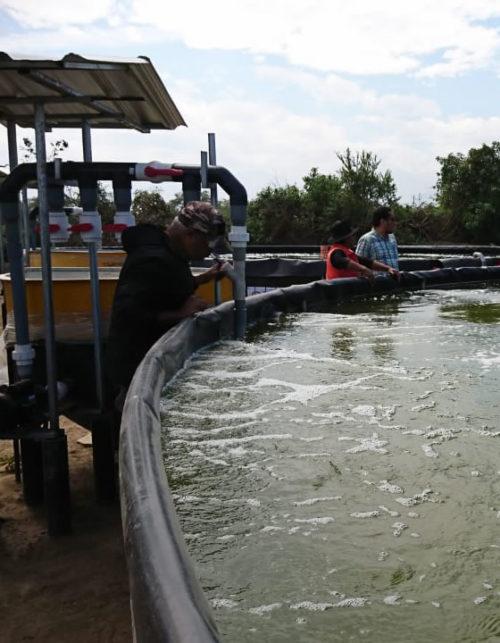 Acuicultura controla Cultivo camaron sistemas RAS intensivo Tilapiacenter