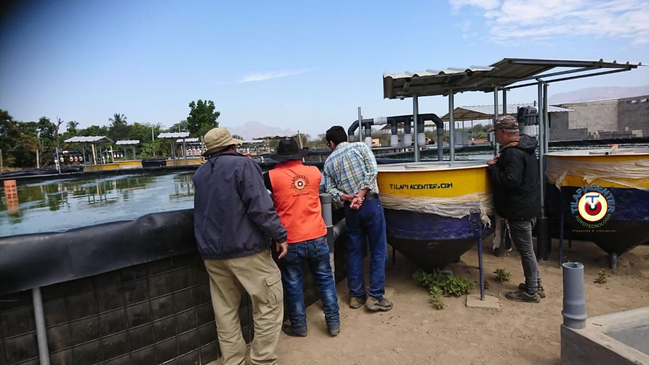 Sistema RAS para cultivo de camaron y tilapia con recirculación del agua