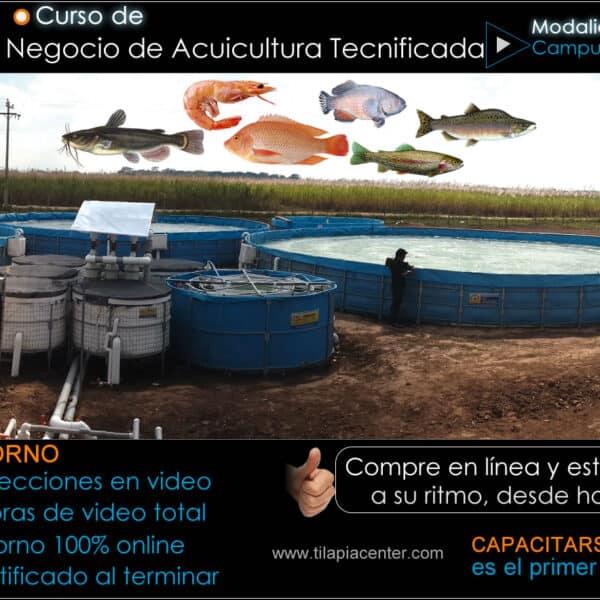 Curso Acuicultura Camarón Tilapia Campus Virtual